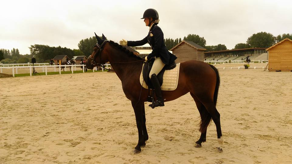 Les poneys de dressage made in Alizay