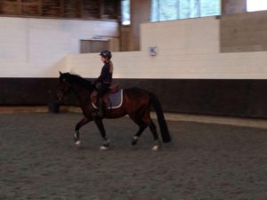 Poney dressage enfant