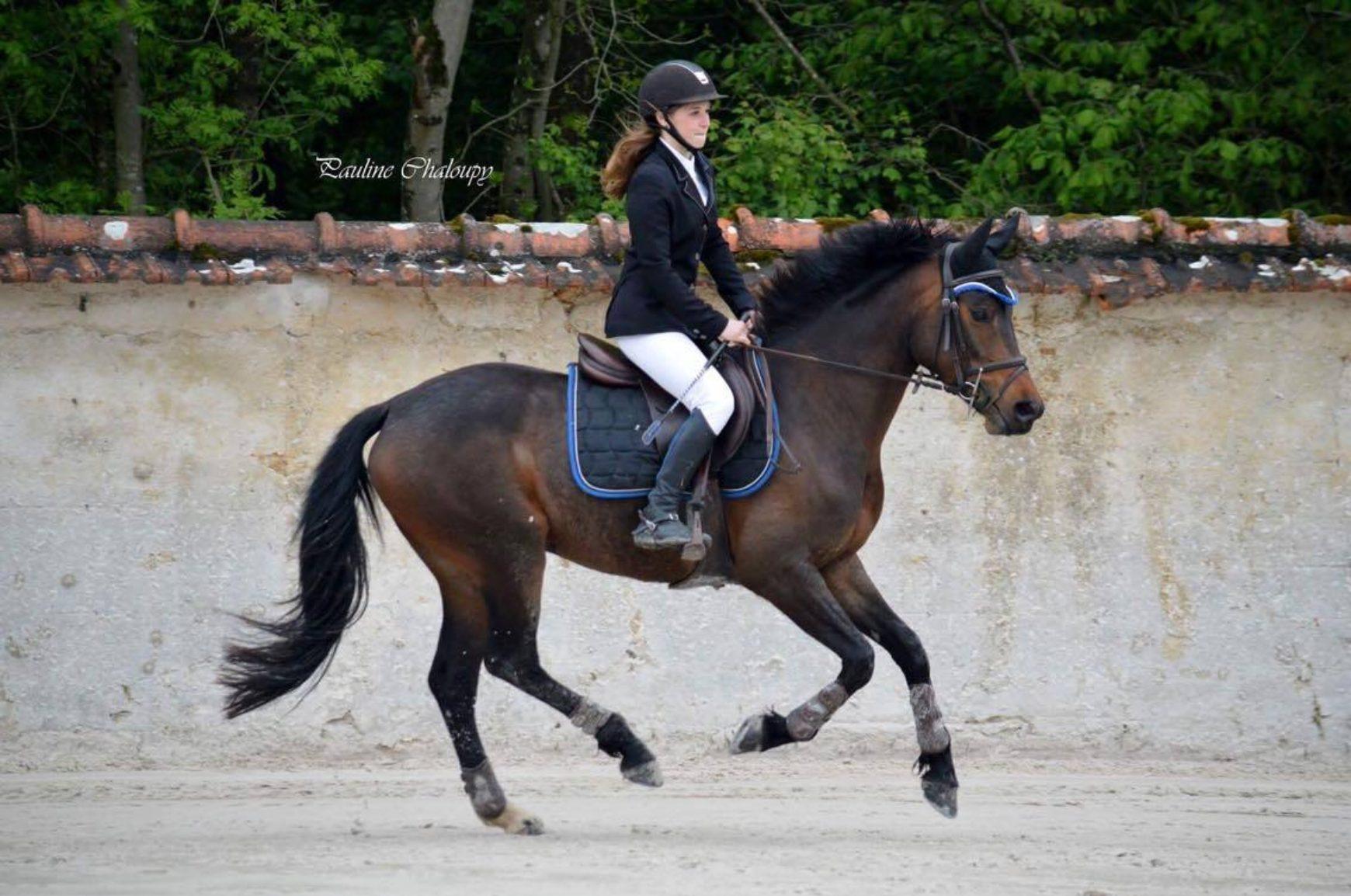 poney sport a vendre