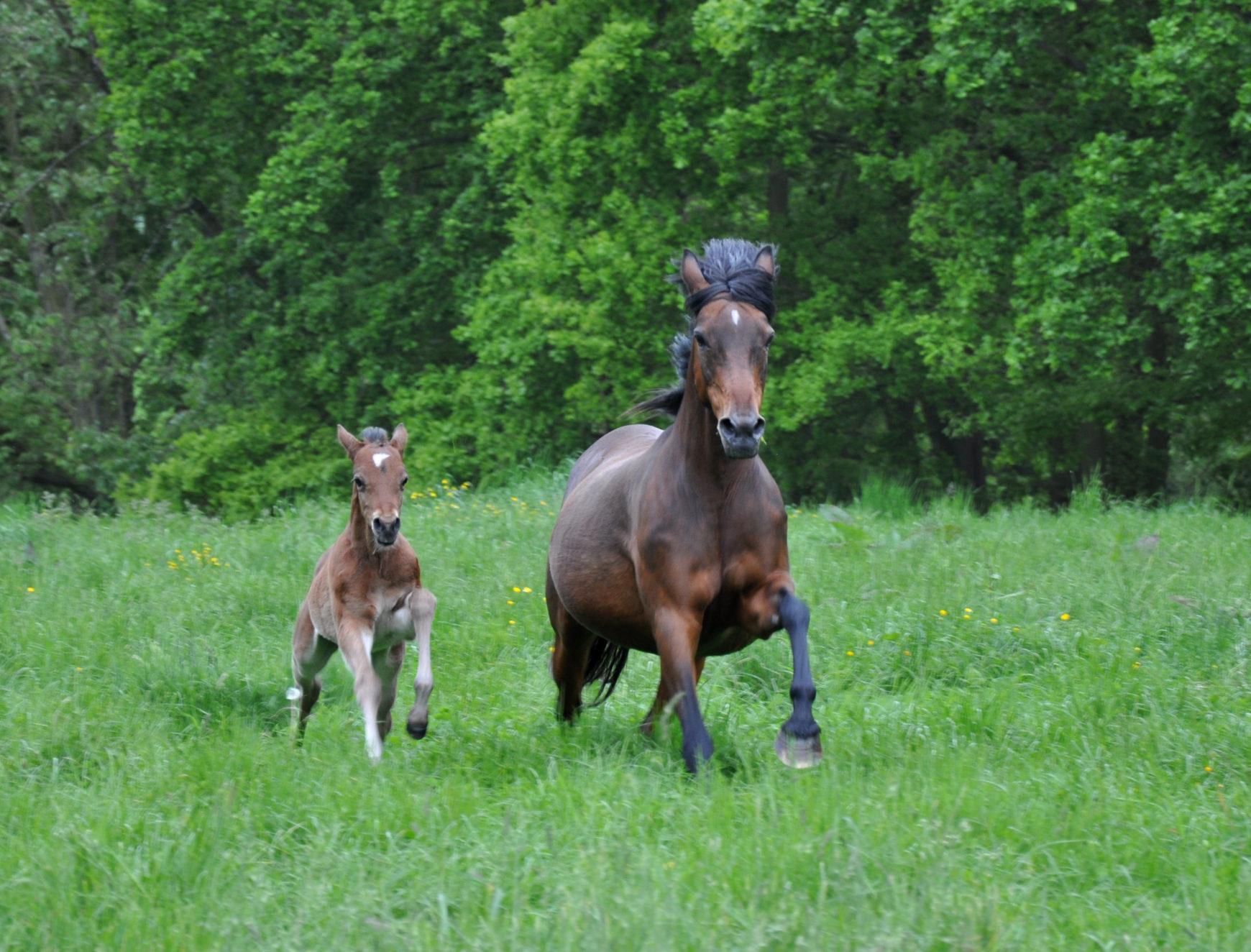 Elevage poneys en France en 2016